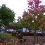 公園 紅葉